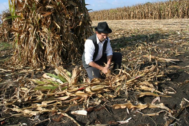 Az alábbi galériát nézi: III. Nemzetközi Kukorica Nap - Dr. Sindely Pál felvételei